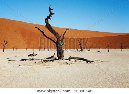 Toten Bäume im Dead Vlei - Sossusvlei, Namib-Wüste, Namibia.