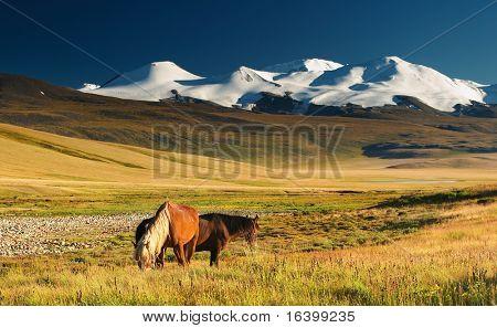 Paisagem com pastagem cavalos e montanhas nevadas