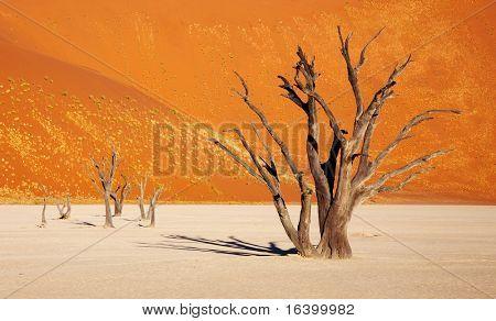 Dead tree in Dead Vlei - Sossusvlei, Namib desert, Namibia