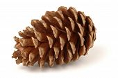 stock photo of pine cone  - Single pine cone isolated on a white background - JPG