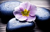 foto of primrose  - three massage stones  - JPG