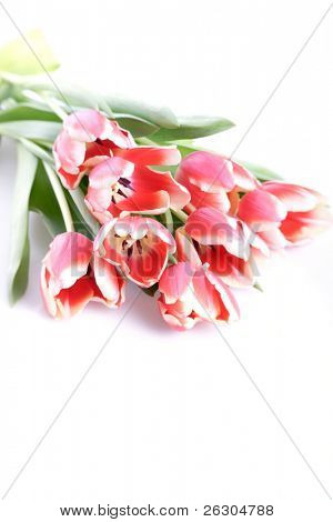 spring tulip bouquet with highkey effect