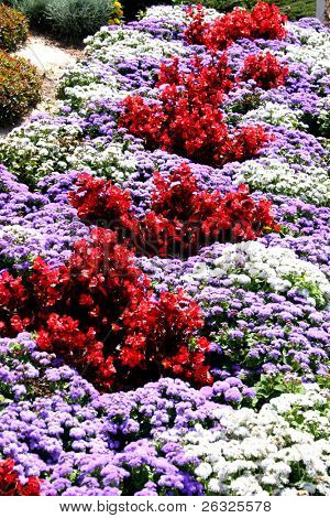 Formal flower bed with a geometric design containing begonias, alyssum and ageratum.