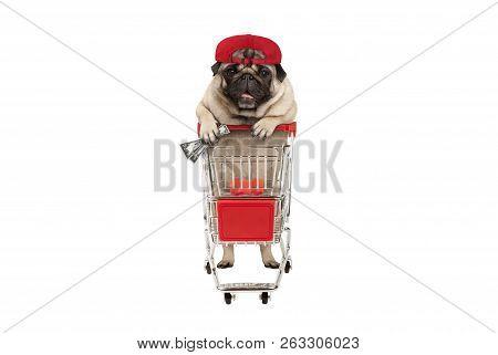 Funny Happy Pug Puppy Dog