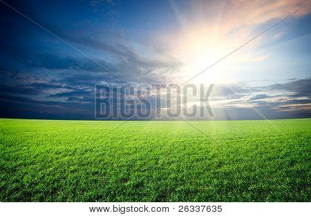 Sunset sun and field of green fresh grass under blue sky