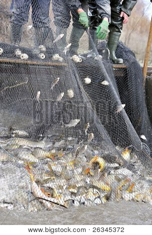 fishermen netting fish