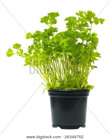 plantgoed