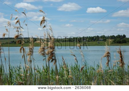 View Of River Through Reed