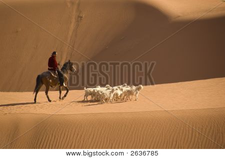 Navajo Indian Herding His Flock Of Sheep