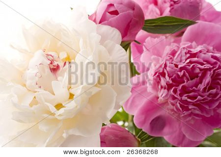 close up of beautiful  spring flowers