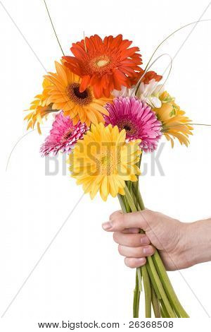 hand holding beautiful bouquet of colorful gerbera flowers, summer flowers