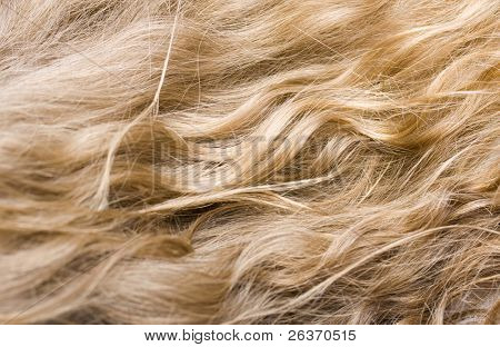 close-up of wavy blond hair