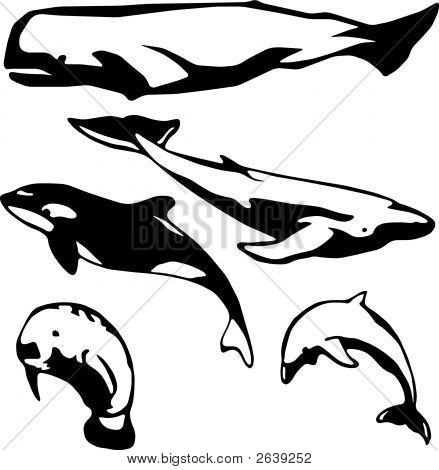 Marine_Mammals