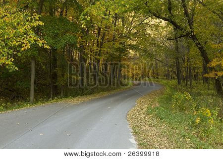 Road In Woods Autumn