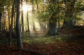 Beautiful Old Forest In Autumn With Sunrays, Nature Background, Selected Focus poster