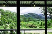 Landscape View From The Window For Relaxing Time, Green Nature Beside The Window, Coffee Bar, Peacef poster