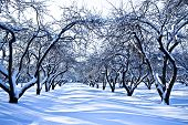 Ski track in winter snowy apple trees garden poster