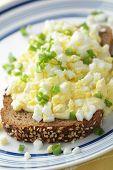 pic of goldenrod  - Goldenrod eggs - JPG