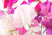stock photo of sweetpea  - Sweet pea flowers in a glass vase - JPG