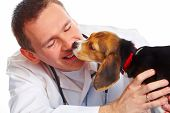 pic of veterinary clinic  - Veterinarian doctor making a checkup of a beagle puppy dog - JPG