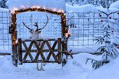 White Reindeer With Horns In Deer Enclosure In Lapland, Finland. Deep Clean Snow Covers Ground,  Enc poster