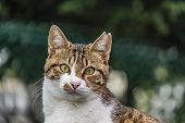 Close Up Sitting Tabby Cat In Nature poster