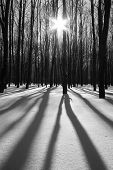 Forest at sunny winter day. Shadows on snow from trees.