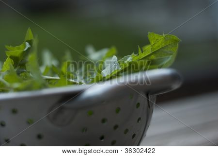 Closeup Of Dandelion Leaves In A Metal Colander