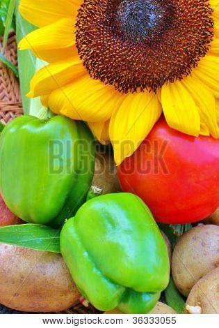 Sunflower and peppers