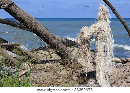 Uprooted Trees And Jetsam On The Baltic Island Of Ruegen