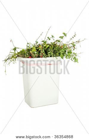 A white trash can full of trimmed plants, isolated on white, ready to be put in the greenery recycling bin.