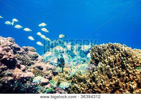 Coral reef and fish in Pacific ocean
