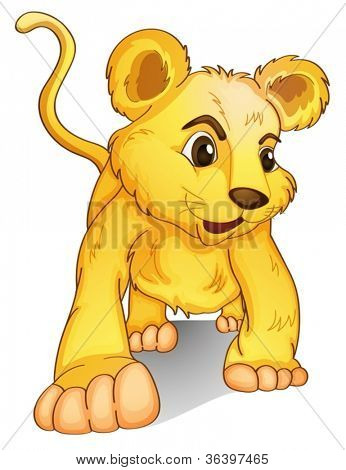 Lion cub on a white background