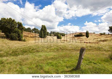landscape at Lueneburg Heath nature reserve