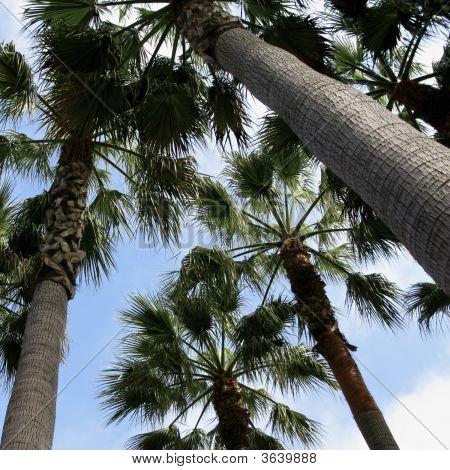Tropic Skies