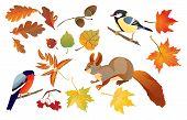 Постер, плакат: Набор изолированных осенью лес листьев и мало птиц и животных белка Снегирь и Маорийская петроика