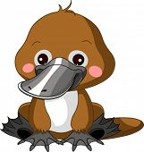 stock photo of platypus  - Fun zoo - JPG