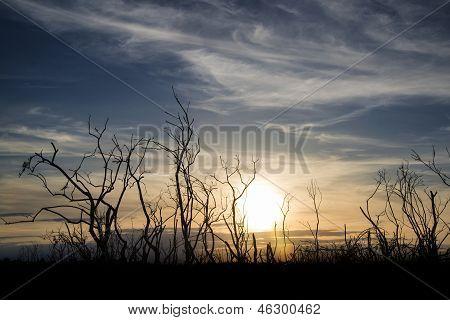 Stark Bush Silhouette Against Stunning Sunset Sky