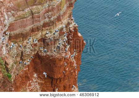 Rock At The North Sea With Many Birds Horizontal