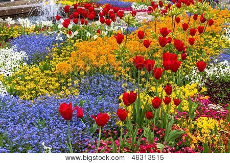 Flower Bed With Red Tulips And Beautiful Blossoms