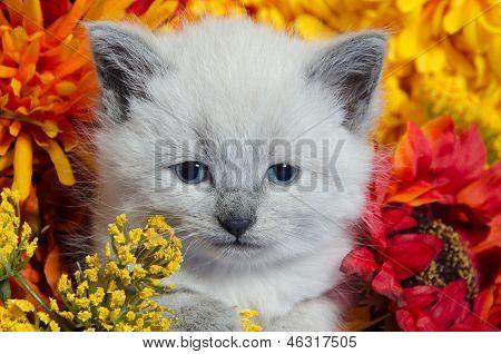 Cute Kitten And Flowers