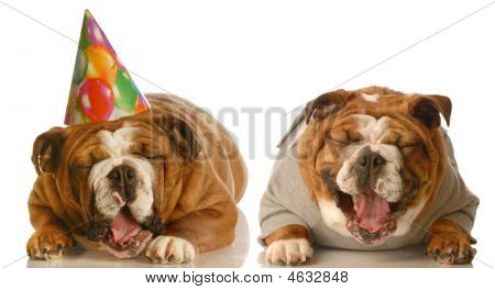 Laughing Birthday Bulldogs