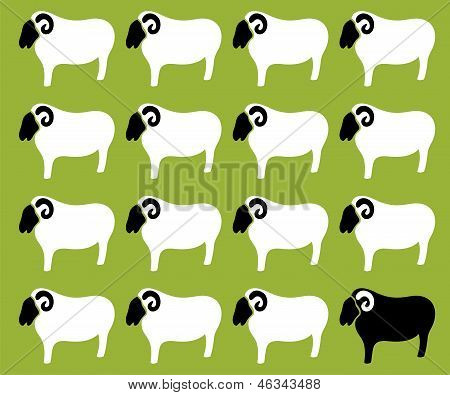 Wallpaper images of sheep