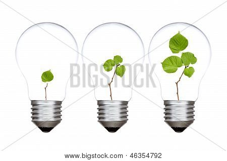 Three Light Bulbs With Green Plants Inside