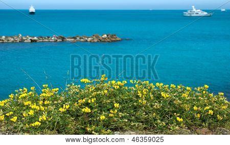 Antibes - Flowers Over Mediterranean Sea