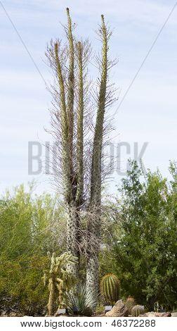 BOOJUM árvore