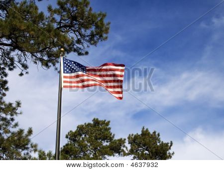 American flag and pines