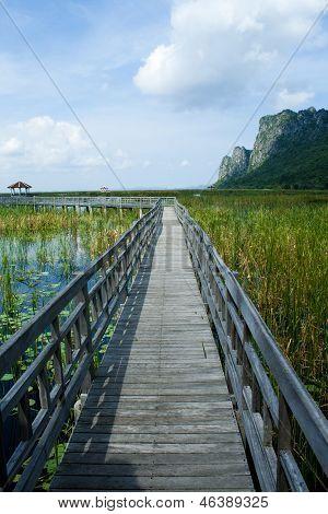 Wooden Bridge in lotus lake at khao sam roi yod national park, thailand
