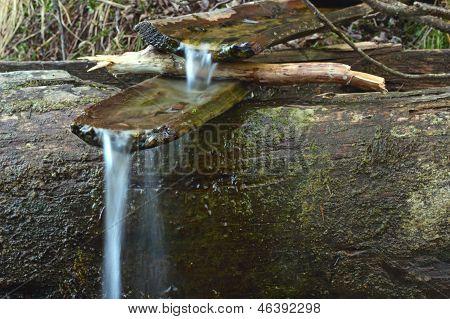 Primavera arcaica com canal de madeira