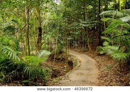 Rain forest Path 2